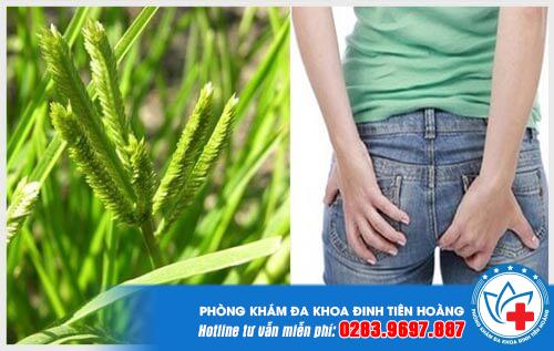 Hướng dẫn cách chữa bệnh trĩ bằng cỏ mần trầu đạt hiệu quả cao